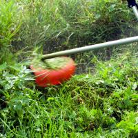 weed-abatement